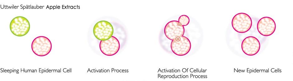 R3R Skin Renewal Process