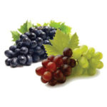 Vitis Vinifera Grape Seed Extract